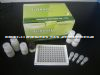 人前动力蛋白1(prok1)ELISA试剂盒